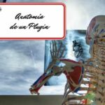 Anatomía de un plugin en WordPress